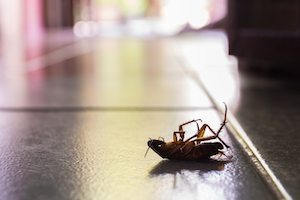 pest management for NYC landlords