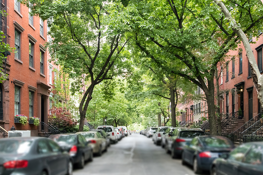 Request Free Trees from NYC Parks