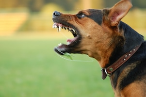 Landlord Liability For Dog-related Injuries