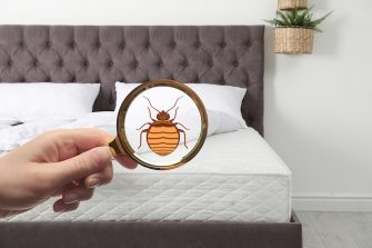 Bedbug Reporting For NYC Landlords