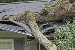 Image for Fallen Trees and Insurance post