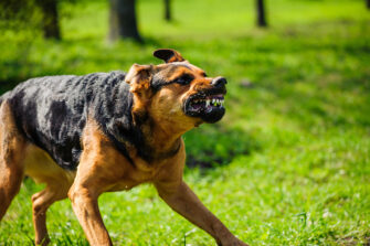 Liabilities And Responsibilities For Dog Owners