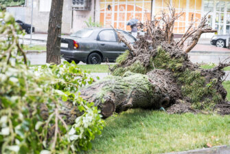 What To Know About Storms And Tree Damage